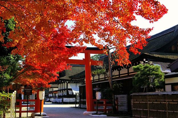 Киото ботанический сад японский сад пагода осень