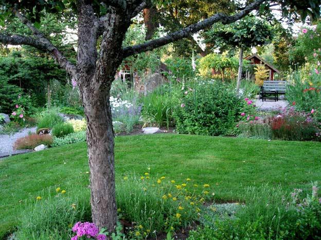 яблоня в саду июнь