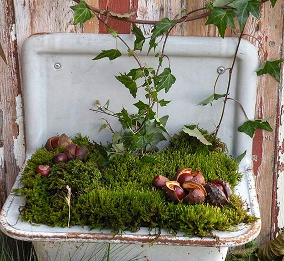 старая раковина мох каштаны дачное декорирование