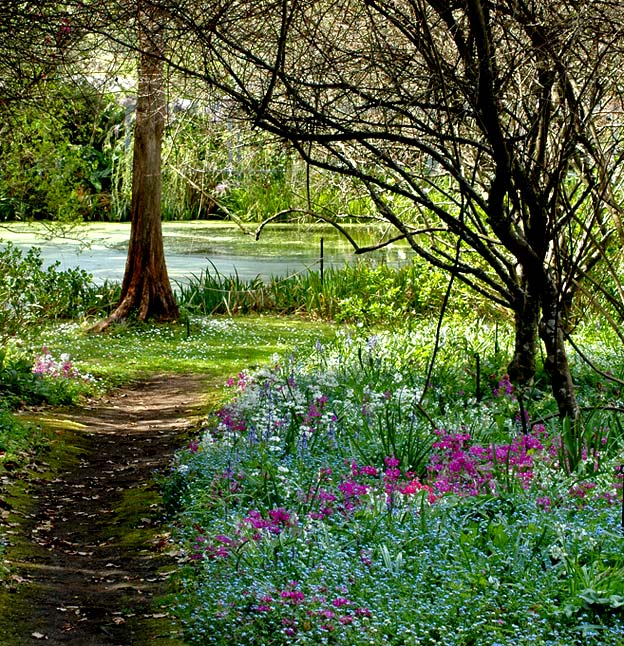 Foxglove Sprires весной