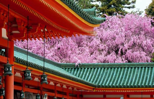 Киото ботанический сад японский сад пагода цветущая сакура