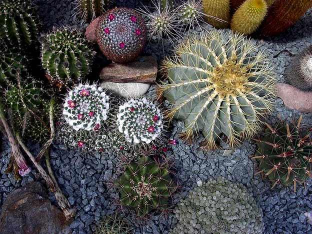 Помните о том, что кактусы - растения с колючками, поэтому с ними нужно обходиться очень осторожно.