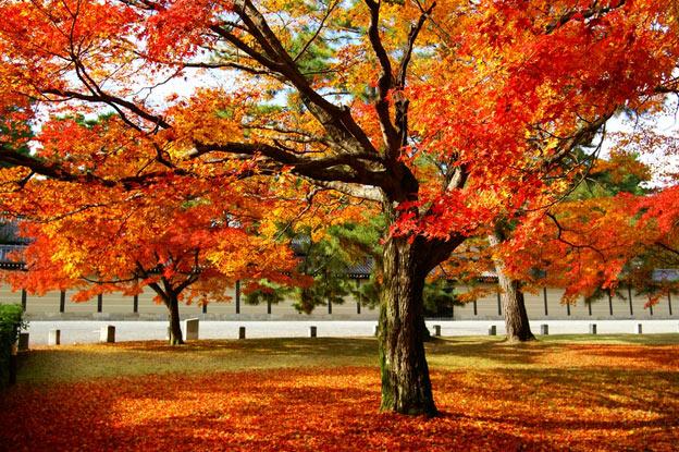 Киото ботанический сад японский сад осенние деревья