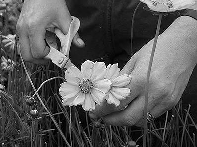 подрезка цветов