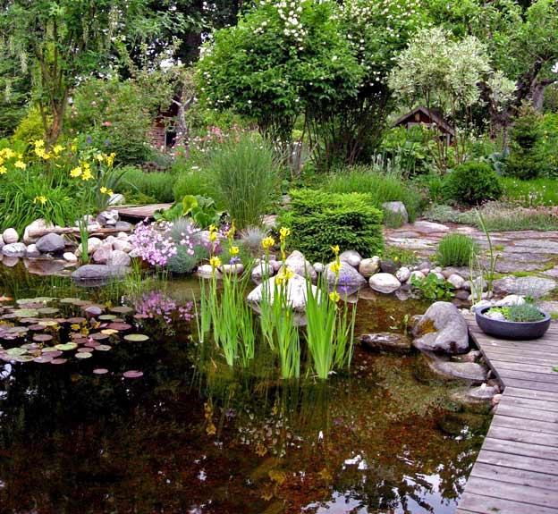какие растения цветы растут в пруду