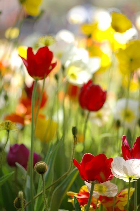 Цветы названия и фото дачное фото