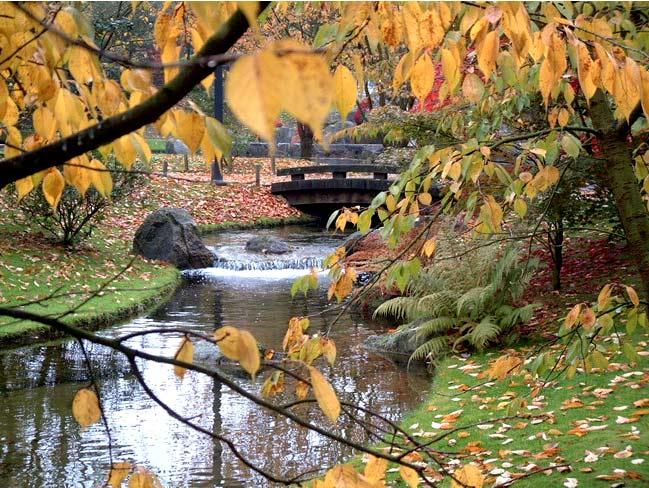 японский сад озеро бельгия хасселт