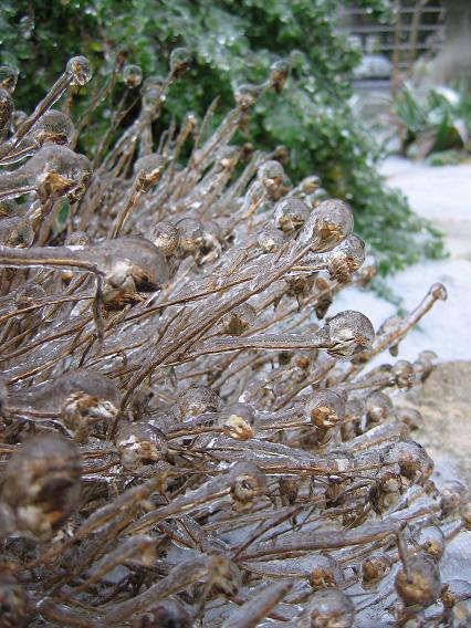 обледенелые травы природа фотозарисовка сад
