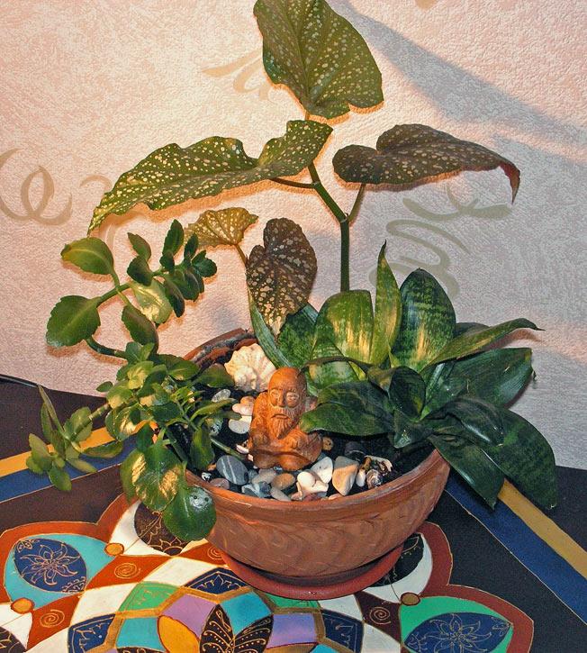 миниатюрный сад в плошке композиция из комнатных растений