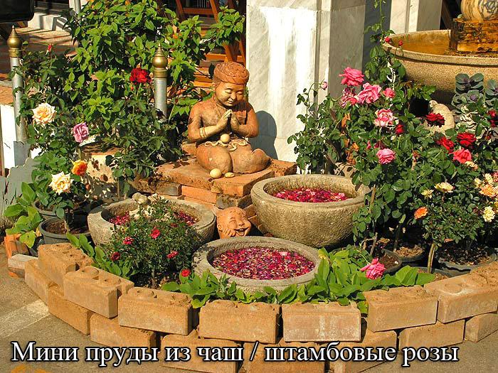 Мини пруды из чаш - штамбовые розы