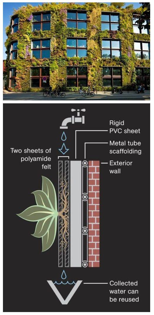 Схема полива вертикального озеленения