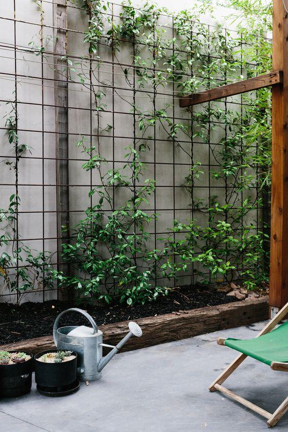 Вертикальное озеленение - шпалера своими руками