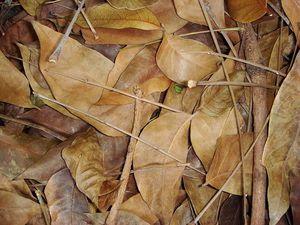 Листья для компостной кучи