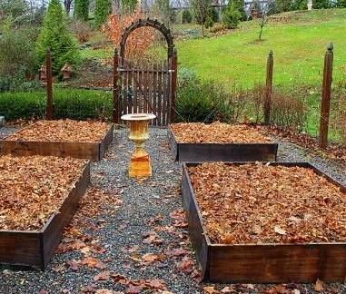 Компост из листьев на грядках