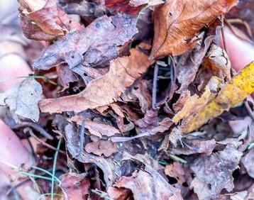 Полуперепревшие листья для компоста