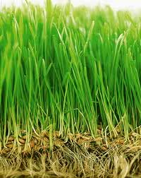 Выращивание газона