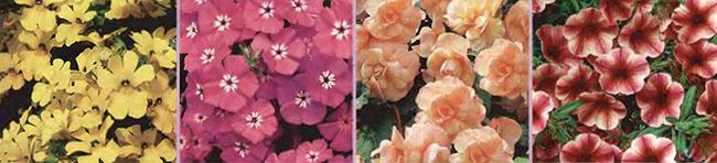 Ампельные цветы и растения в озеленении балконов и террас fg