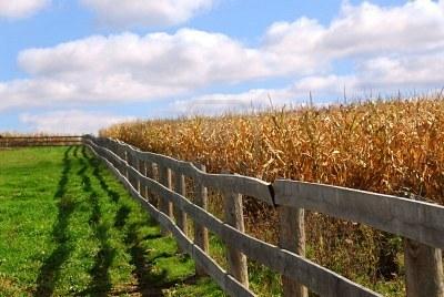 Забор ранчо 6