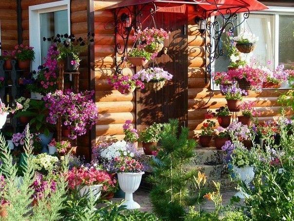 Подвесные цветы в кашпо