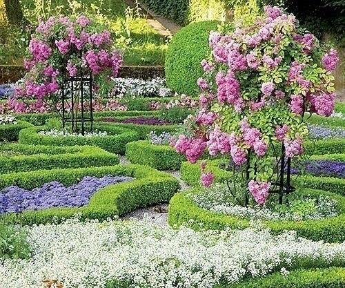 Штамбовые розы - акценты в саду