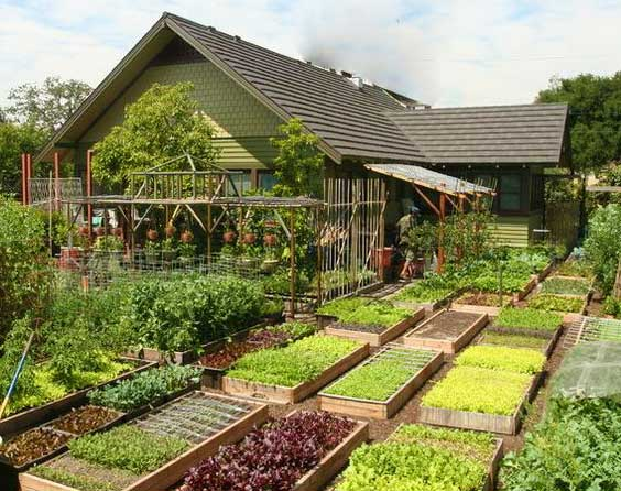 Оптимальная планировка огорода на даче